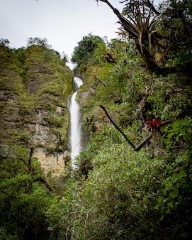 Prachtig landschap van een bos met verbazingwekkende sprankelende watervallen