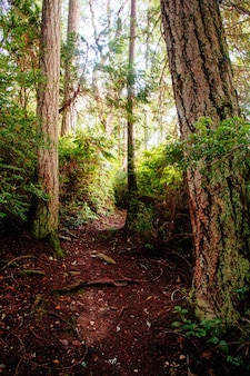 Prachtig landschap van een bos
