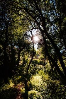 Prachtig landschap van een geweldig wild bos met adembenemend groen
