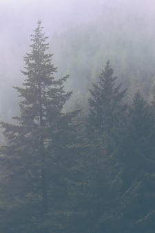 Prachtig landschap van een geweldig wild bos