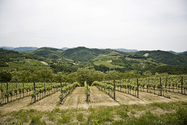 Prachtig landschap van een groene wijngaard omgeven door hoge rotsachtige bergen