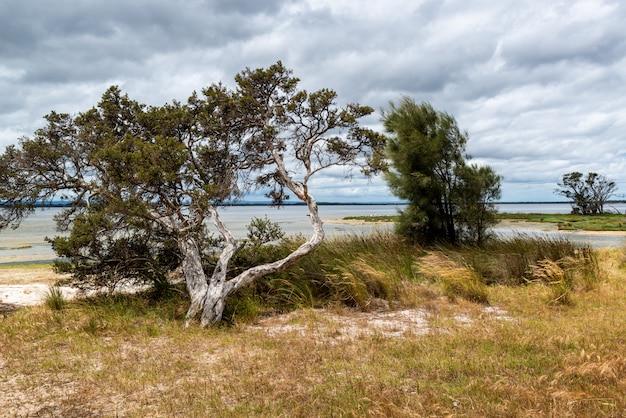 Prachtig landschap van groene bomen en struiken in de buurt van de zee onder de gekke wolken