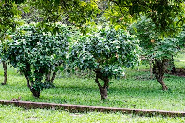 Prachtig landschap van groene boom en bloeiende bloemen in een botanische tuin