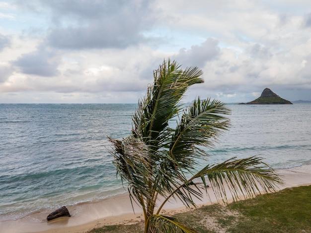 Prachtig landschap van hawaï met oceaan