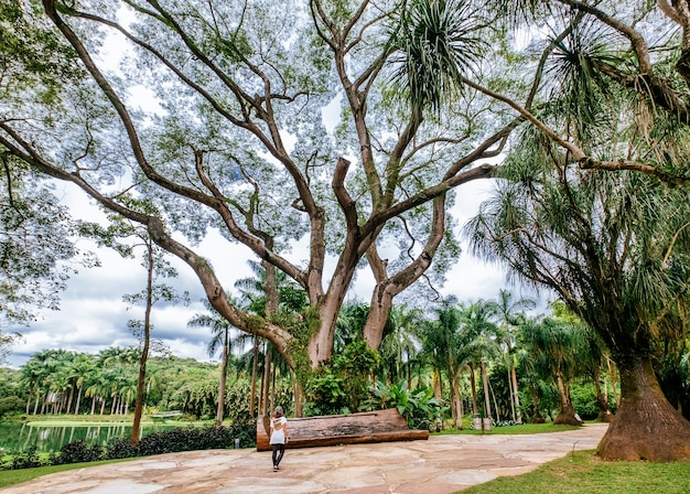 Prachtig landschap van het mangal das garcas-park in de stad belem in brazilië