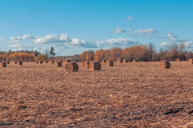 Prachtig landschap van het platteland. ronde strobalen in geoogste velden en blauwe lucht met wolken