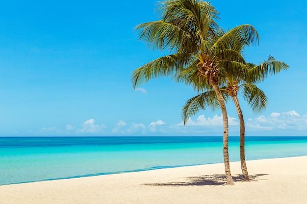 Prachtig landschap van tropisch strand kokospalmen zee zeilboot en wit zand
