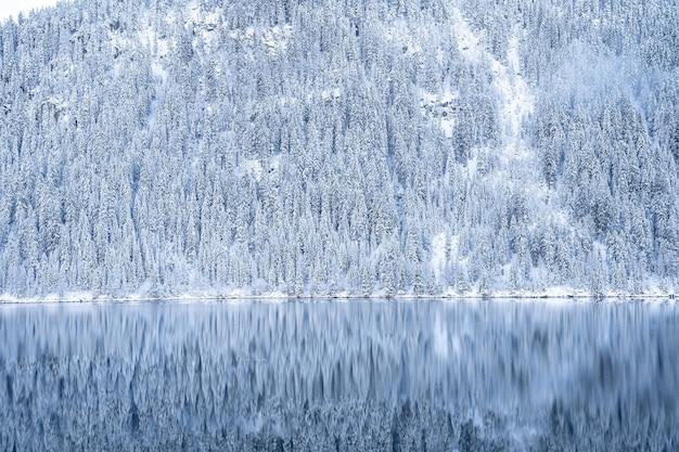 Prachtig landschap van veel bomen bedekt met sneeuw in de alpen die reflecteren in een meer