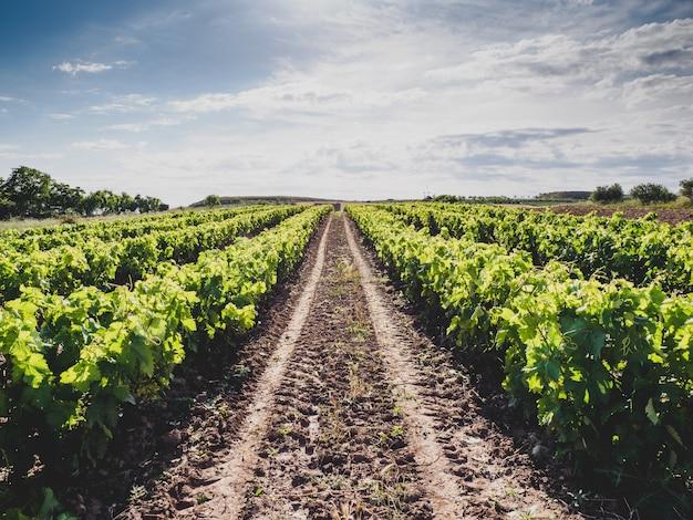 Prachtig landschap van wijngaarden in la rioja, spanje overdag
