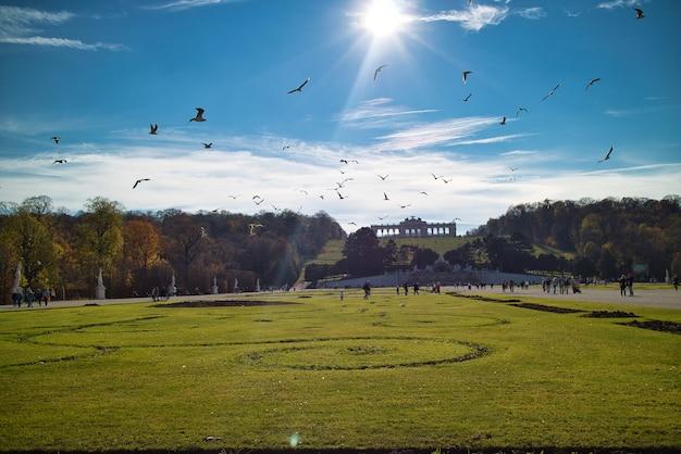 Prachtig landschap voor het schonbrunn-paleis in wenen, oostenrijk met een breed groen veld en vliegende vogels erboven in een blauwe lucht.