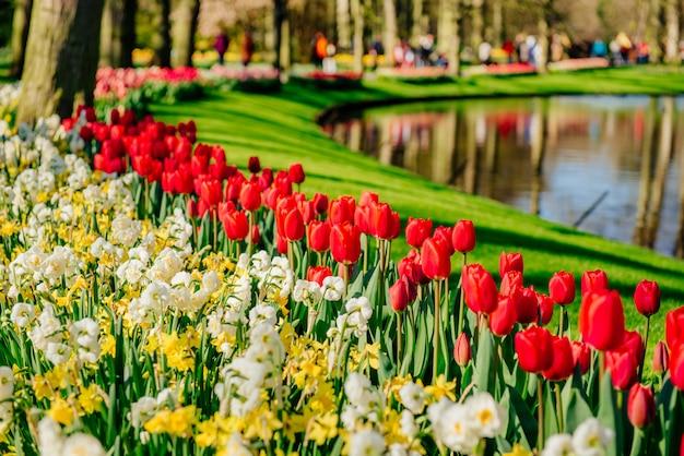 Prachtig lente landschapspark. bloeiende bloemen. holland