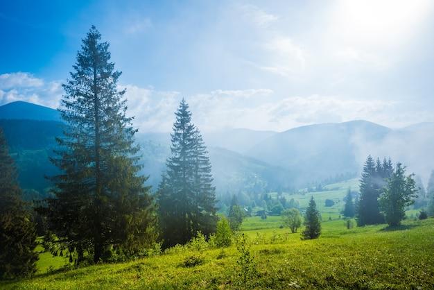 Prachtig magisch uitzicht op het sparrenbos dat op de heuvels groeit