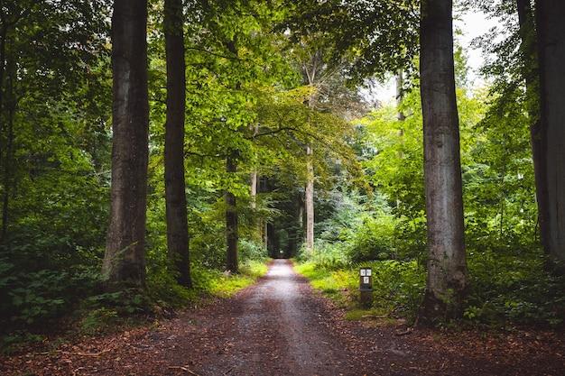 Prachtig pad door het bos