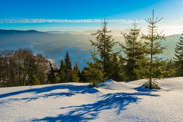 Prachtig panorama van een besneeuwde helling met een bos en uitzicht op de besneeuwde bergketens