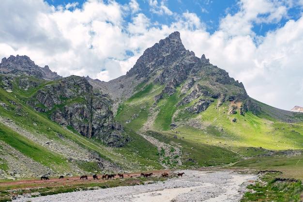 Prachtig panorama van hoge rotsachtige bergen met machtige gletsjers, sneeuwtoppen en groene weiden tegen de blauwe lucht en de wolken