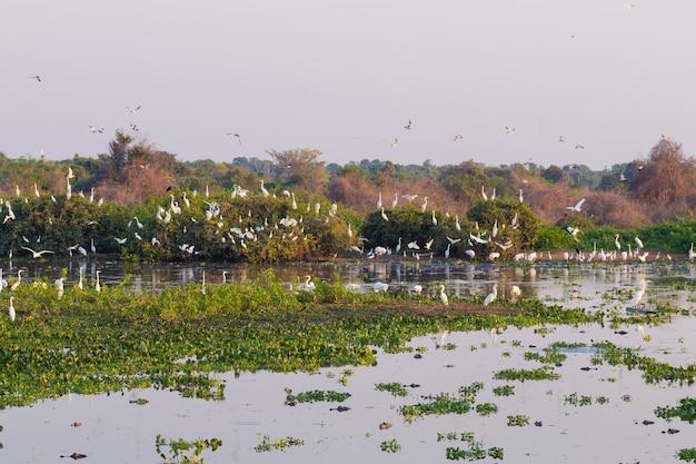 Prachtig pantanal-landschap, zuid-amerika, brazilië. natuur en dieren in het wild langs de beroemde onverharde weg van transpantaneira.