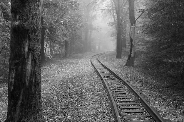 Prachtig park in de mist