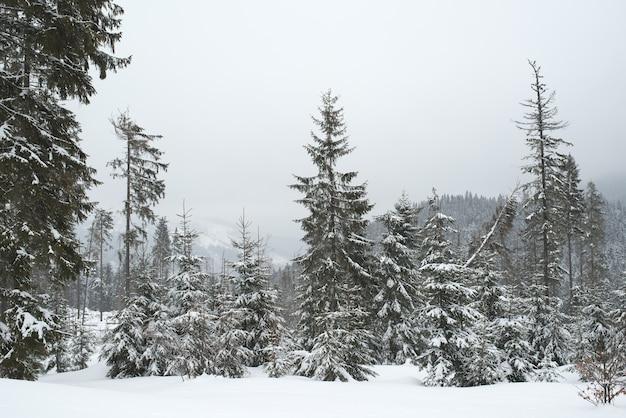 Prachtig ruw zicht op dennenbomen in de sneeuw en hellingen in het koude noordelijke land.