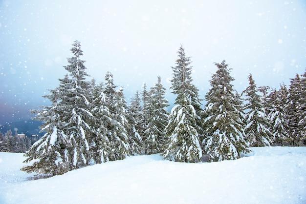 Prachtig ruw zicht op dennenbomen in de sneeuw en hellingen in het koude noordelijke land