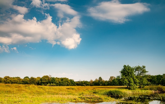 Prachtig schilderachtig landschap van groen veld met bomen gras en helder meer op een warme zonnige zomerdag