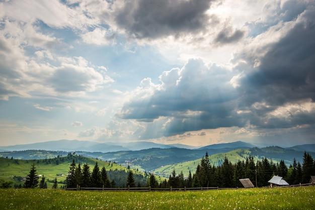 Prachtig schilderachtig uitzicht op groene weiden op de achtergrond van hoge naaldbomen groeien in de bergen appel zonnige warme zomerdag