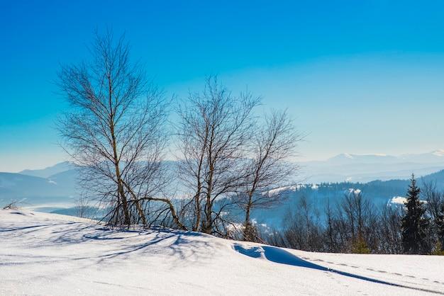Prachtig schilderachtig uitzicht van loofbomen zonder bladeren en coniferen die groeien op heuvels en bergen