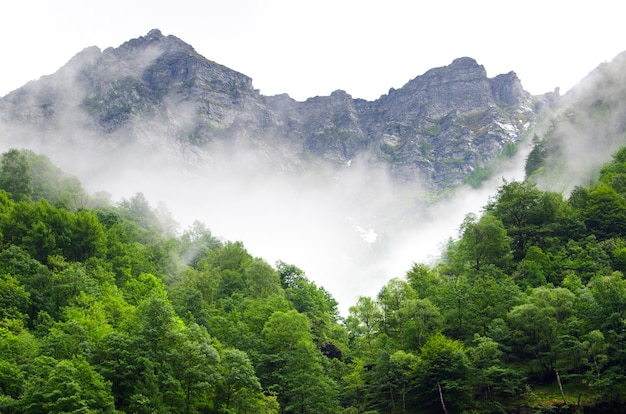Prachtig schot van bergen en bossen in zwitserland