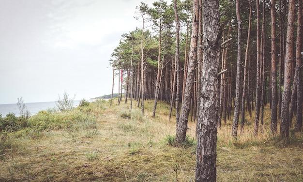 Prachtig shot van de bossen langs een kust