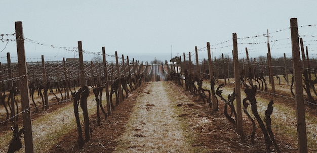 Prachtig shot van de wijngaarden beschermd door houten en metalen hekken