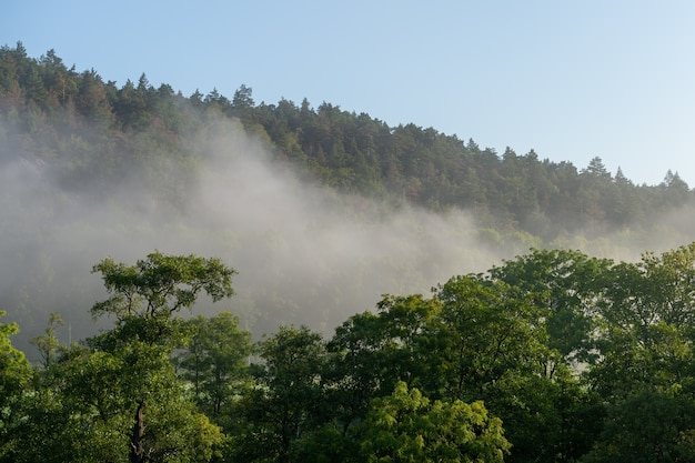 Prachtig shot van een boombos omgeven door hoge bergen gehuld in mist