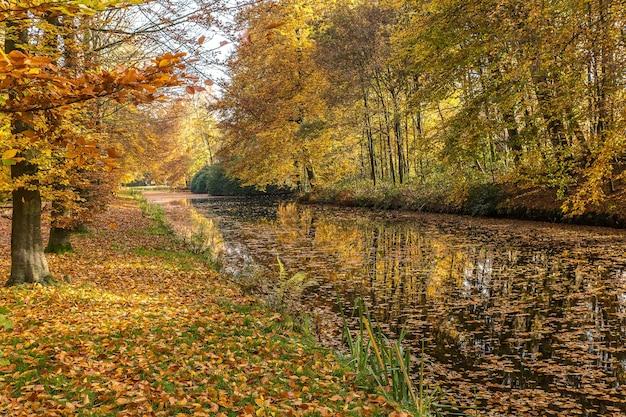 Prachtig shot van een meer bedekt met droge bladeren in het midden van een park vol bomen