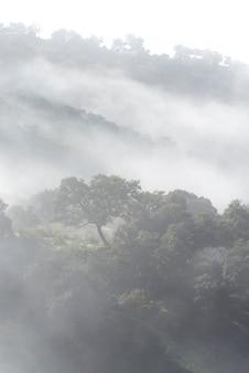 Prachtig shot van een mistig en mistig mysterieus bos.