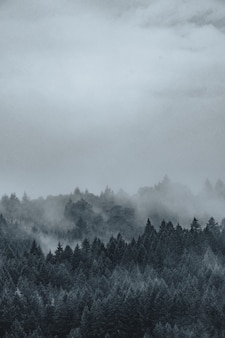 Prachtig shot van een mistig en mistig mysterieus bos