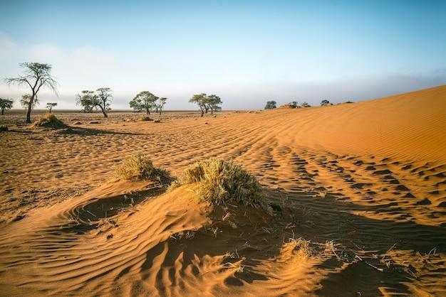 Prachtig shot van een namib woestijn in afrika met een strakblauwe lucht