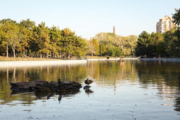 Prachtig stadspark met meer in zonnige ochtend