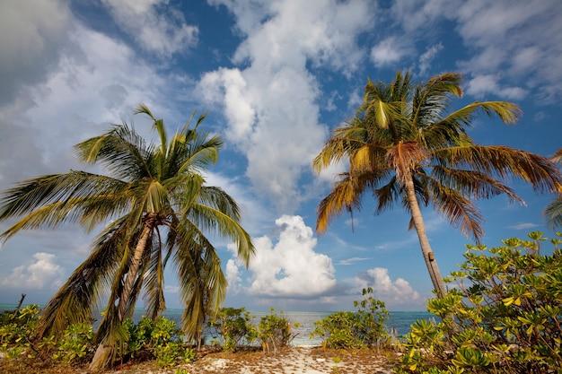 Prachtig strand op de malediven. natuurlijk mooi.