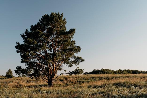 Prachtig uitzicht met hoge boom