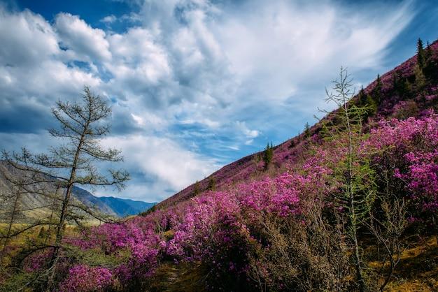 Prachtig uitzicht met roze rododendrons op de heuvel