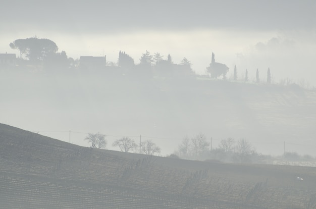 Prachtig uitzicht op de bomen op de heuvel bij de boerderijen in het mistige weer
