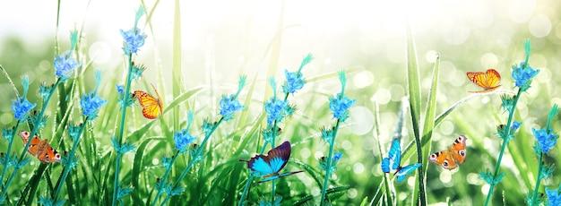 Prachtig uitzicht op de natuur van vlinder op onscherpe achtergrond in de tuin.