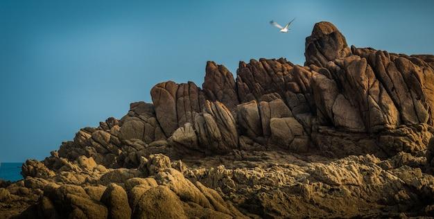 Prachtig uitzicht op de prachtige rotswanden aan zee en een zeevogel die vliegt