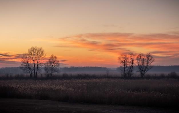 Prachtig uitzicht op de velden met kale bomen tijdens zonsondergang