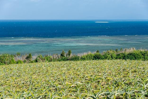 Prachtig uitzicht op een ananasveld en gradiëntblauwe zee vol koralen barasu-eiland op de achtergrond