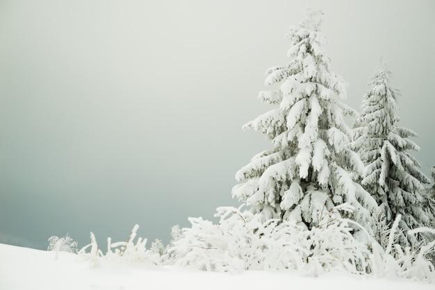 Prachtig uitzicht op een besneeuwde heuvel met dennenbomen en sneeuw op een achtergrond van grijze bewolkte hemel.