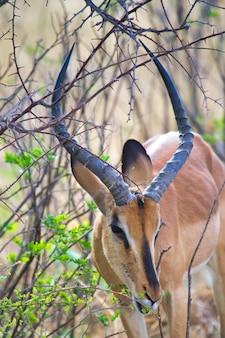 Prachtig uitzicht op een hert dat bladeren eet van de takken van de boom in het bos op een zonnige dag