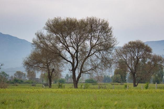 Prachtig uitzicht op een met gras begroeid veld met prachtige bomen gevangen in het bewolkte weer