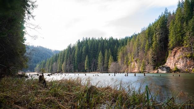 Prachtig uitzicht op een rivier omringd door met bomen bedekte kliffen gevangen onder de blauwe lucht