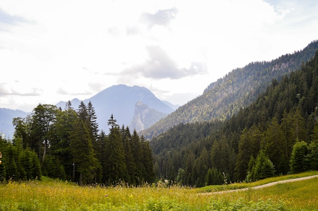 Prachtig uitzicht op een veld met bloemen en hoge bergen in duitsland