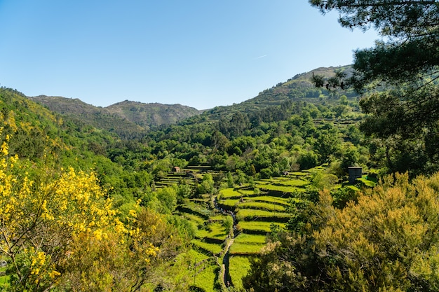 Prachtig uitzicht op een wijngaard omgeven door groen