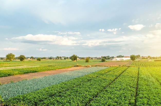 Prachtig uitzicht op europese akkers. agro-industrie en agribusiness. luchtfoto platteland